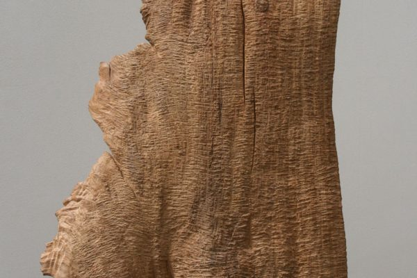 416) Un Chêne, Chêne h.56cm